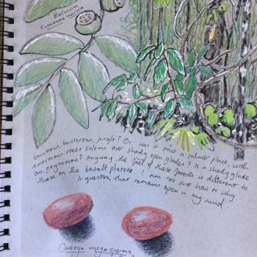 Your nature journal + bushland restoration = an inspiring morning