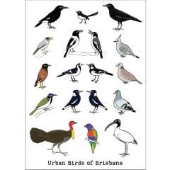 Urban birds of Brisbane card