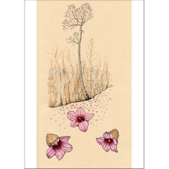 Queensland lacebark tree card