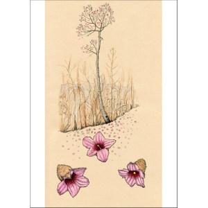 Queensland lacebark tree card