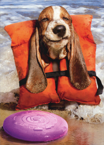 Basset Hound In Life Jacket Funny Dog Birthday Card By