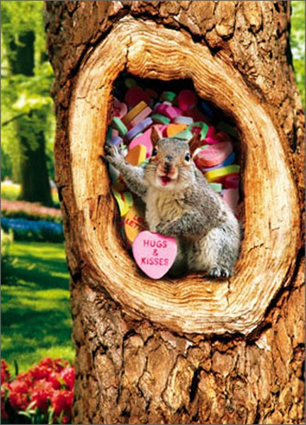 Squirrel In Tree With Candy Heart Stand Out Pop Up
