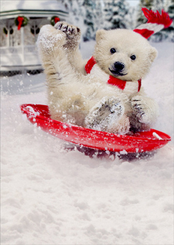 Polar Bear Snow Slide Funny Christmas Card By Avanti Press