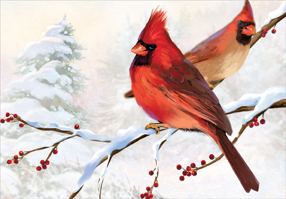 Two Cardinals Christmas Card By Designer Greetings