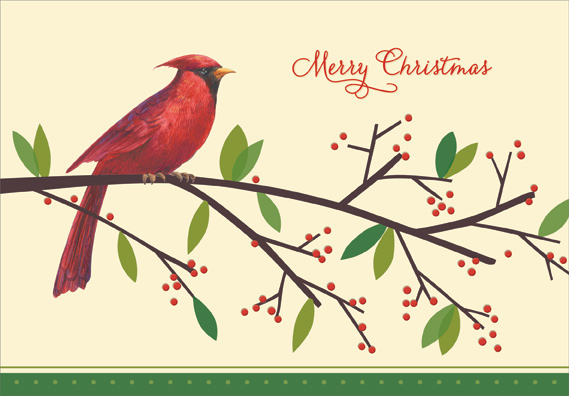 Cardinal On Branch Christmas Card By Designer Greetings