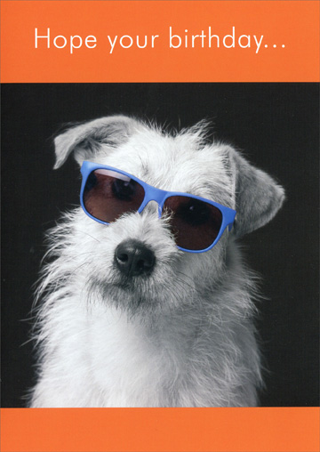 White Dog With Sunglasses Funny Humorous Birthday Card By Oatmeal Studios