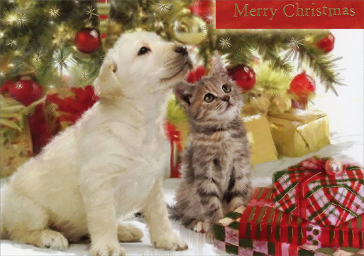 Puppy Amp Kitten Looking Up Cat Amp Dog Christmas Card By