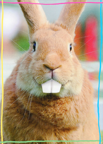 Big Teeth Rabbit Funny Easter Card By Recycled Paper Greetings