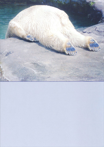 Polar Bear Funny Humorous Birthday Card By Recycled