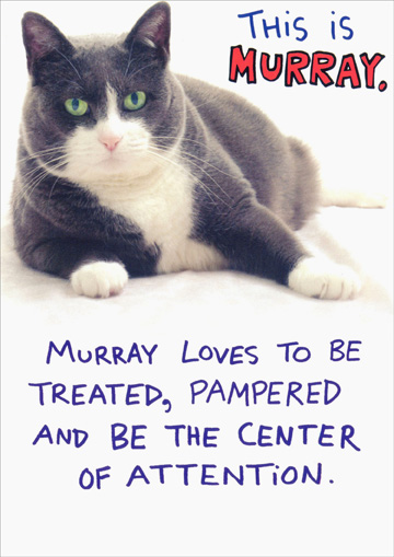 Murray Funny Humorous Cat Birthday Card By Recycled