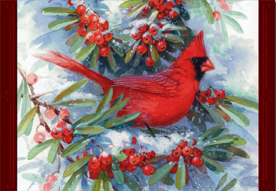 Cardinal In Branches 16 Cards16 Envelopes Image Arts