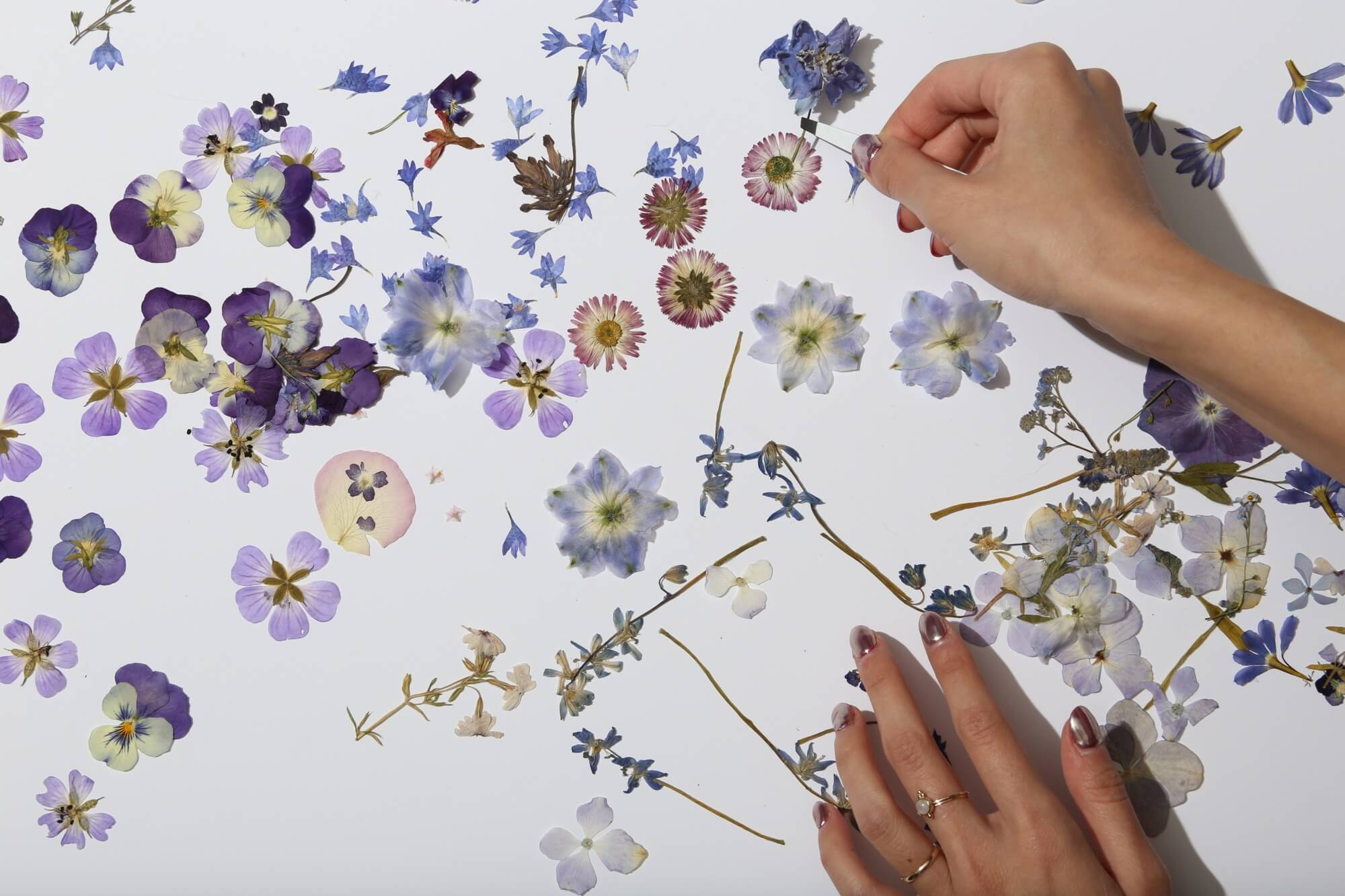 Pressed flower tips and tricks from our studio     Paperless Post Blog Pressed flowers tutorial