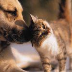 Robotstofzuigers voor honden en katten