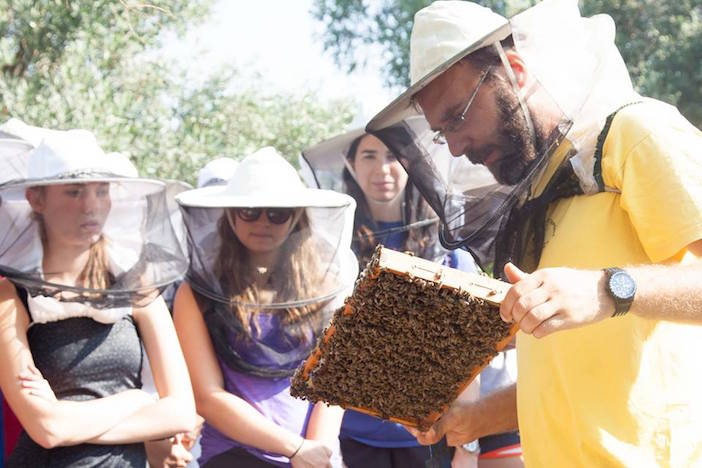 Participants learn about beekeeping and Greek honey. Students harvested their own honey, and sampled it in the Greek yogurt they produced themselves!