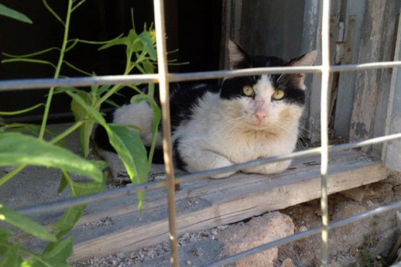 Transatlantic Partnership Helps Stray Cat Problem on Greek Island of Amorgos