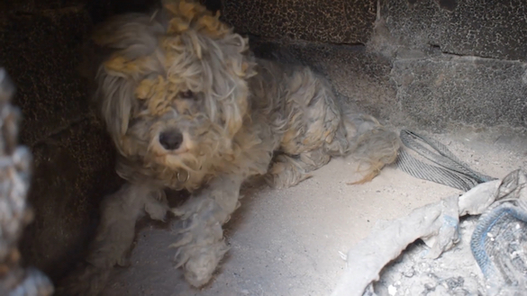 (Video) Dog Miraculously Found Alive Hiding in Oven After Greek Wildfire