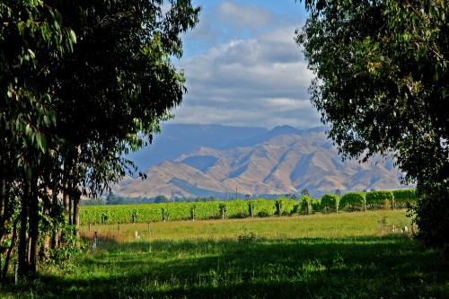 grovemill-vineyard