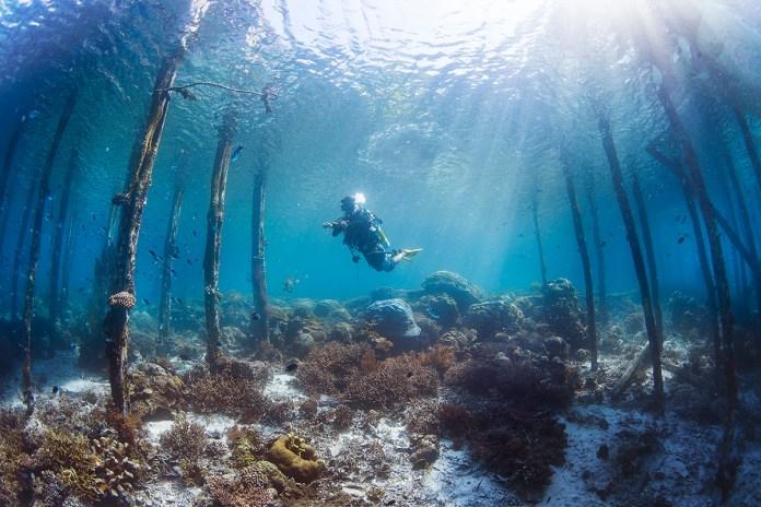 Can Beginner Divers Dive In Raja Ampat Papua Paradise