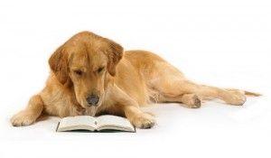 Derechos de los animales, protección, defensa y bienestar animal