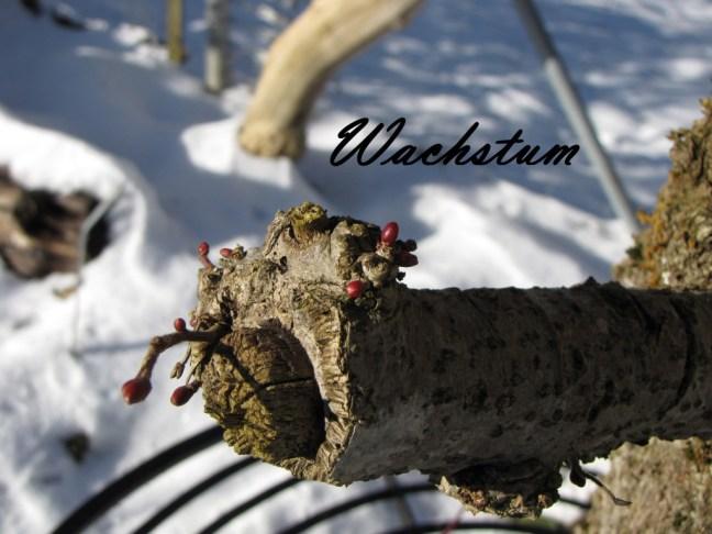 Paradiesgarten Maag winter garten - wachstum