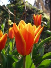 Frühjahrsgarten