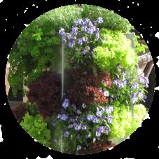 Kompostierung und Pflanzen gemeinsam