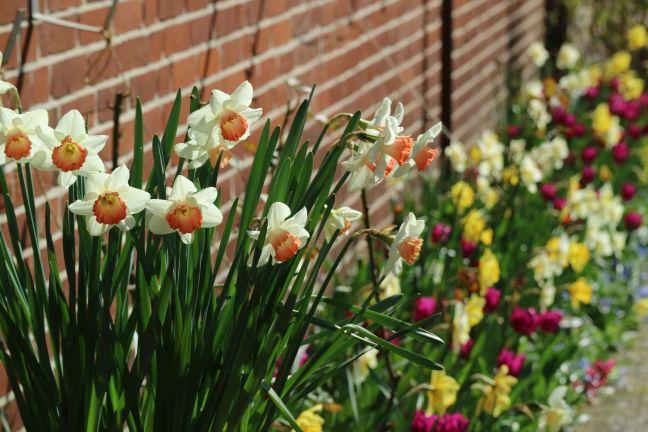 Frühlingsband