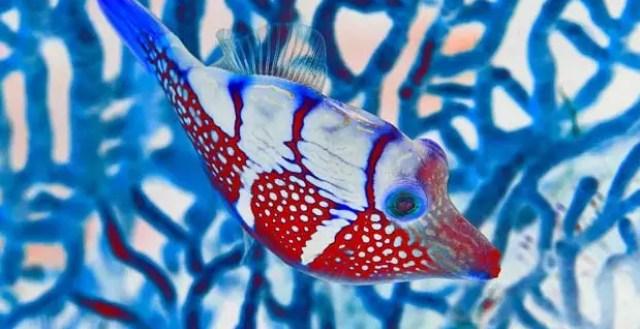 Een nieuw perspectief op de onderwaterwereld