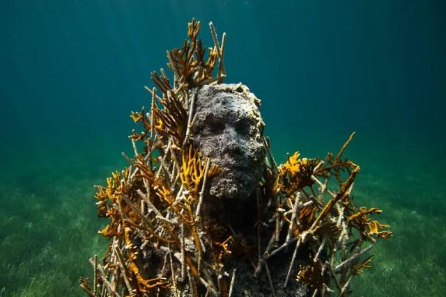 Onderwaterbeelden 24