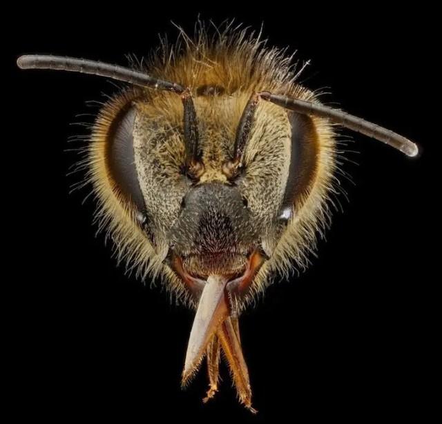 bijen3
