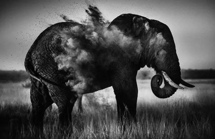 Kleurplaat Van Dieren Wilde Dieren De Afrikaanse Savanne In Prachtige Zwartwit Foto S
