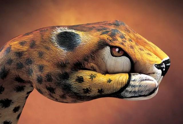 Optische illusies in het dierenrijk   Paradijsvogels Magazine