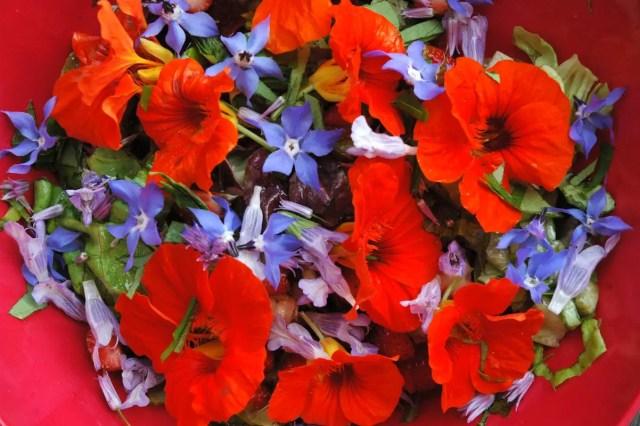 Eetbare bloemen | Paradijsvogels Magazine