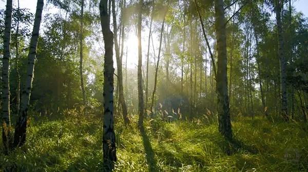 De wonderen van het bos | Paradijsvogels Magazine