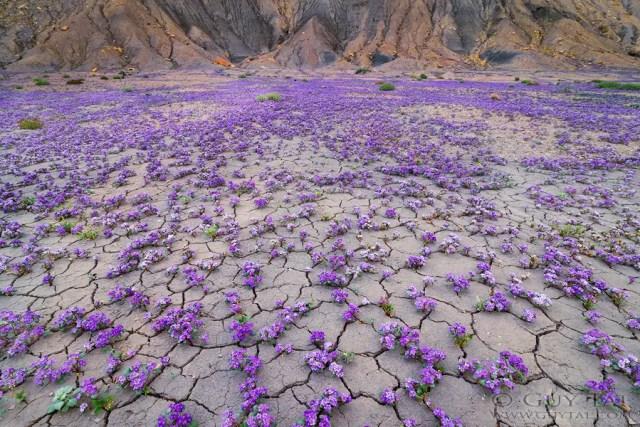 bloemen in de woestijn