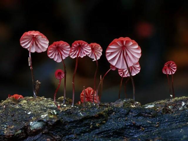 paddenstoelen fotografie