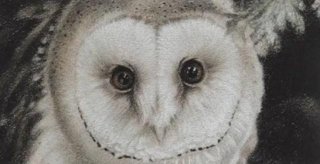 Het Uilendagboek | Een uilenbegroeting