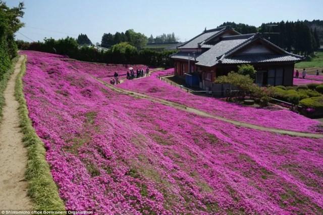 japanse man zaait bloemen2