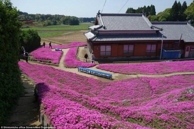 japanse man zaait bloemen5