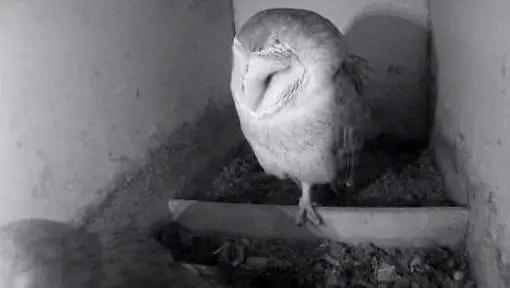 webcam vogelbescherming