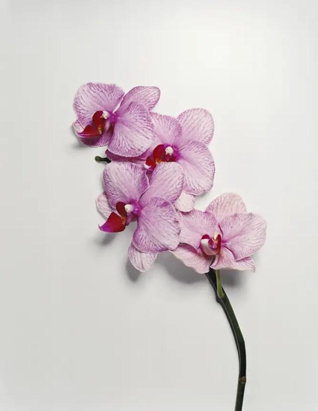 bloemkunst foto of papier13