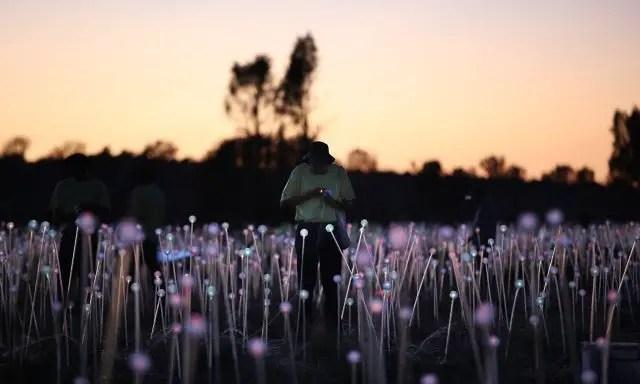 Bruce Munro - Field of light (2)