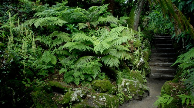 The Lost Gardens of Heligan (14)
