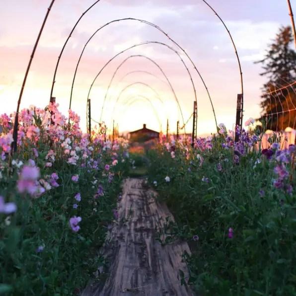 floret flower 2016-09-01 19.16.51