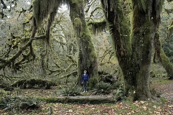 bomen van mos2