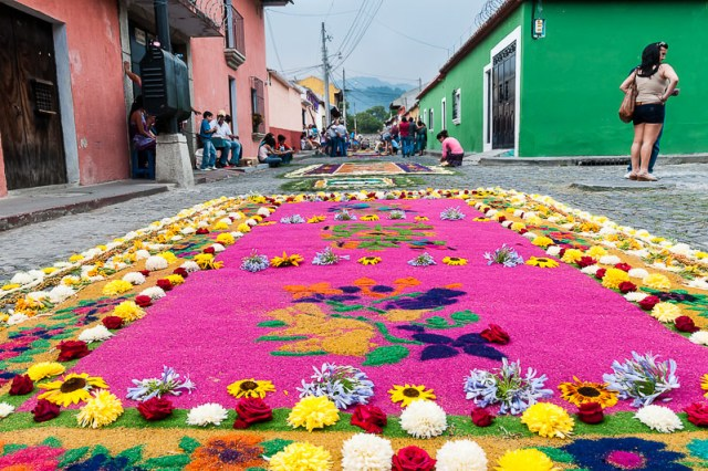 Sawdust carpet with flowers