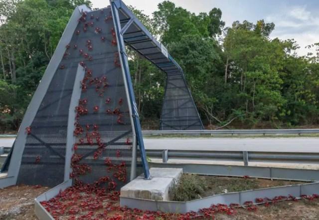 bridges-for-animals-around-the-world-1