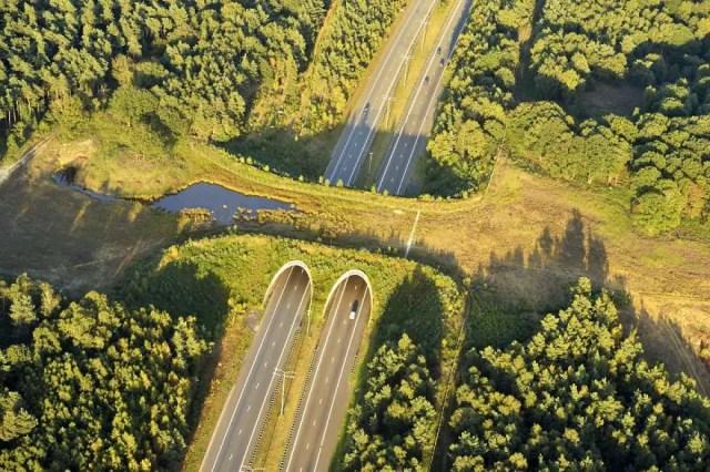 bridges-for-animals-around-the-world-2