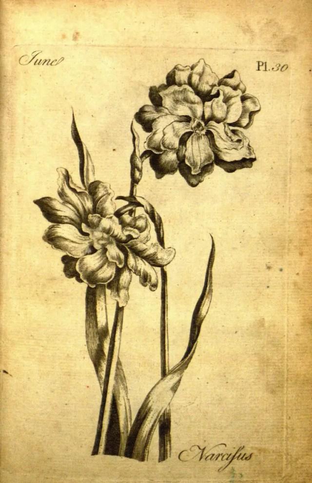 The Florist 14