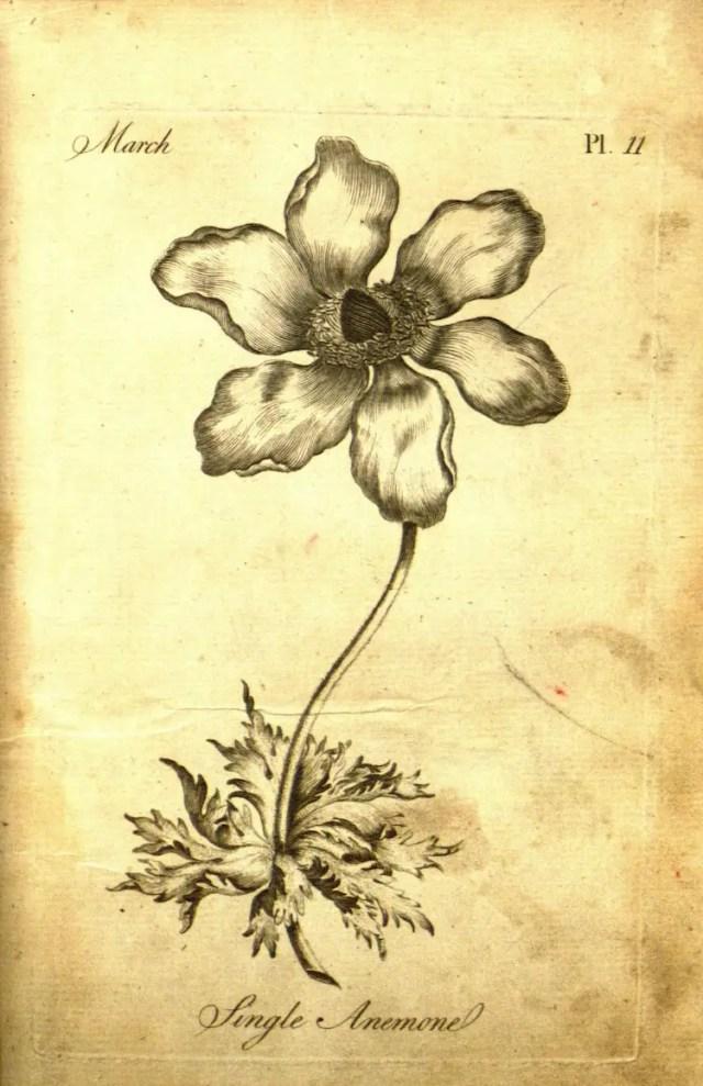 The Florist 7